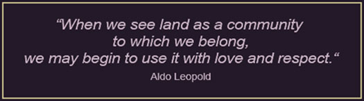 """When we see land as community to which we belong, we may begin to use it with love and respect."" Quote by Aldo Leopold."